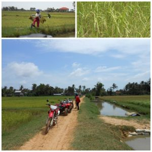 A ride through the rice paddies