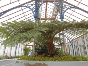 The tree ferns