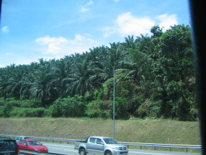 Rubber and palm olive plantations as far as the eye can see