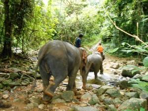 Thailand 1445